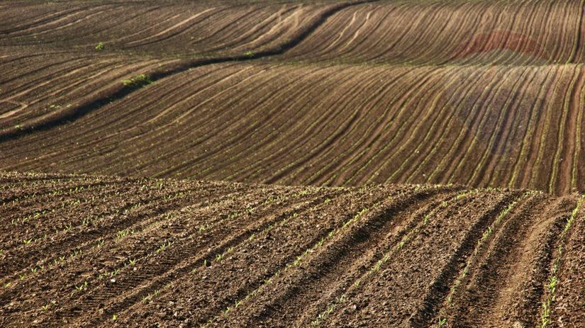PREDAJ - orná pôda 2,8 ha - k.ú. Čereňany