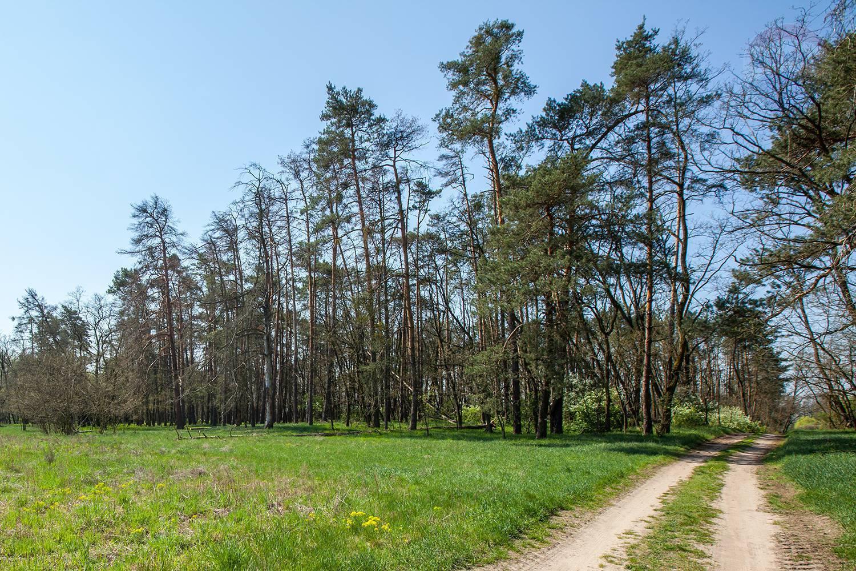 Ponúkam na predaj lesný pozemok v Borskom Svätom Jure -časť Tomky